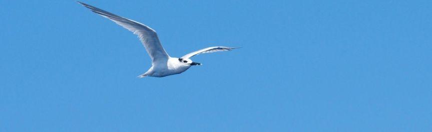 https3a2f2fnavivoile.com2fwp-content2fuploads2f20172f032fcatamaran-navivoile-sortie-oiseaux-de-mer-au-depart-de-canet-en-roussillon-e1491062396861